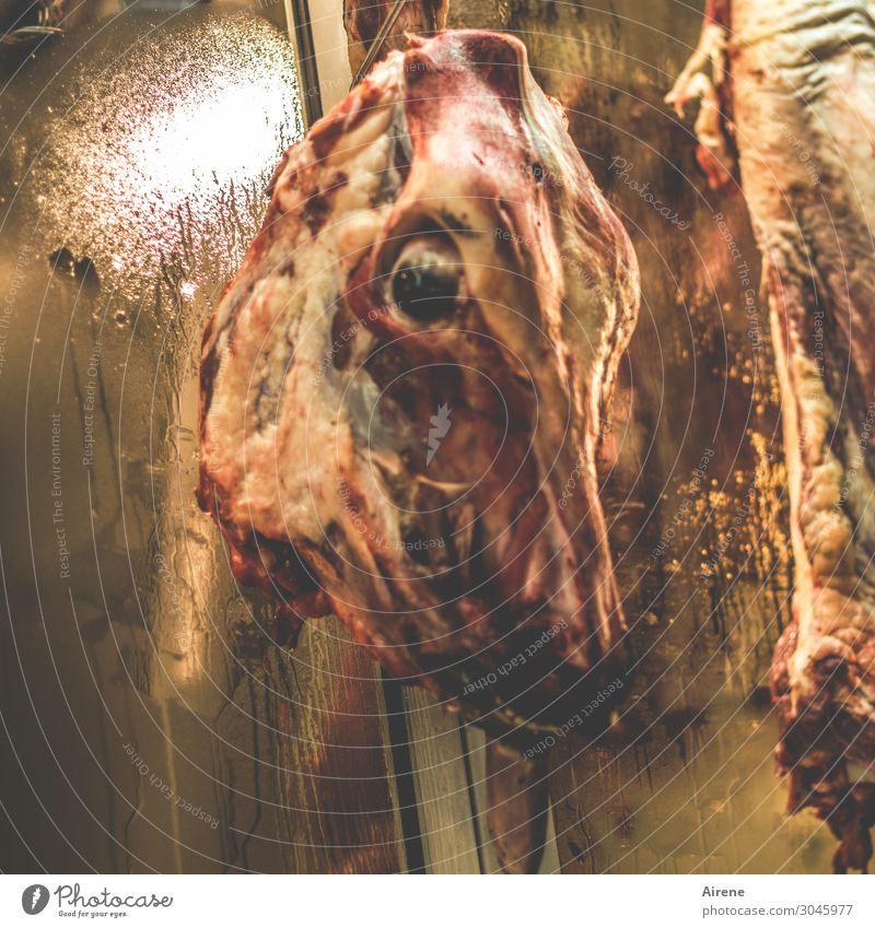 Kopf Schmerzen Fleisch Metzgerei Schlachtung Totes Tier Tierschädel bedrohlich dunkel Ekel gruselig braun rot Mitgefühl Tod Traurigkeit grausam grauenvoll töten