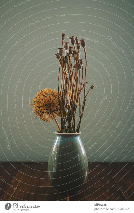 mohn in der vase Pflanze alt Mohnkapsel Vase Tisch Stillleben trocken Trockenblume Farbfoto Innenaufnahme Menschenleer Kontrast