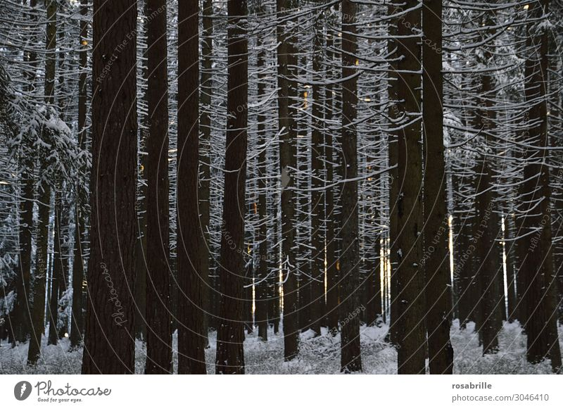 unser Wald | wertvoll ruhig Winter Schnee Umwelt Natur Klima Klimawandel Baum Holz kalt Stimmung Umweltschutz Schneelandschaft kahl Laubbaum Nadelbaum Frost