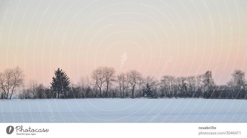 Abendstimmung im Schnee   nebulös ruhig Winter Weihnachten & Advent Natur Landschaft Himmel Nebel Baum Sträucher Feld Wald träumen kalt gelb orange weiß