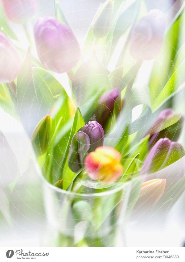 Tulpengruß ein schönes Wochenende für Euch Natur Pflanze Blume Blatt Blüte Blumenstrauß Blühend leuchten gelb grün violett orange rot türkis weiß Tulpenblüte