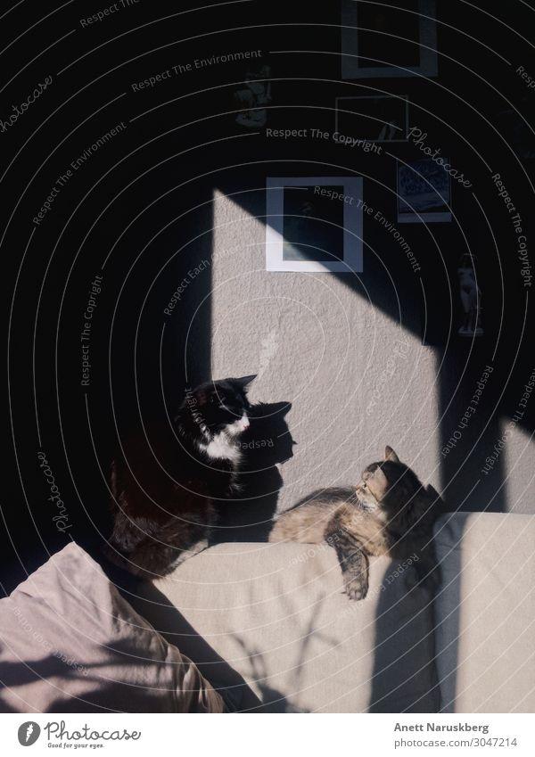 Die Katzen Tier Haustier 2 Tierpaar Blick Akzeptanz Geborgenheit Warmherzigkeit Freundschaft Zusammensein Liebe Tierliebe Gedeckte Farben Innenaufnahme