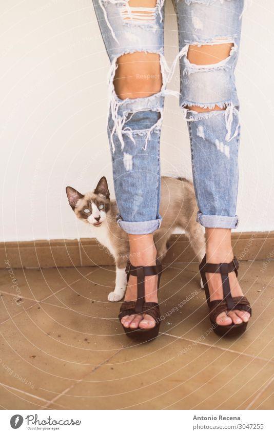 zerrissene Katze Lifestyle Stil Frau Erwachsene Tier Mode Bekleidung Hose Jeanshose Damenschuhe Haustier stehen Erotik niedlich gerissen zerrissene Jeans
