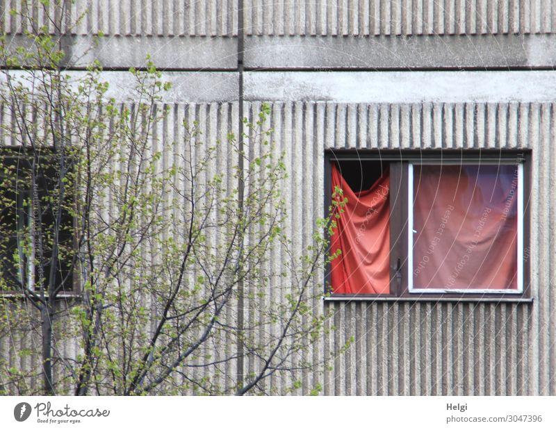 luftig| verhangen alt Pflanze grün weiß rot Fenster Leben Wand Umwelt Gebäude Mauer außergewöhnlich Fassade grau Häusliches Leben Kreativität