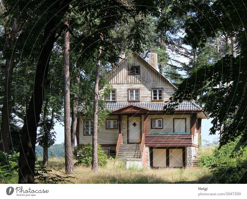 einsames verwunschenes altes Haus steht zwischen hohen Bäumen Umwelt Natur Landschaft Pflanze Sommer Schönes Wetter Baum Gras Sträucher Gebäude Architektur