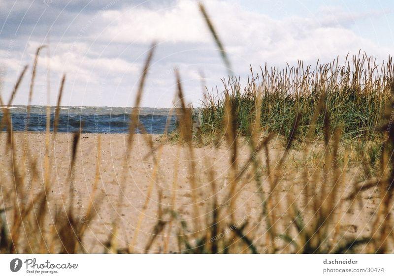 Wie das Land, so das ... Wasser Himmel Meer Strand Wolken Ferne Gras Sand Wellen Küste Wind Stranddüne Düne Ostsee Nordsee