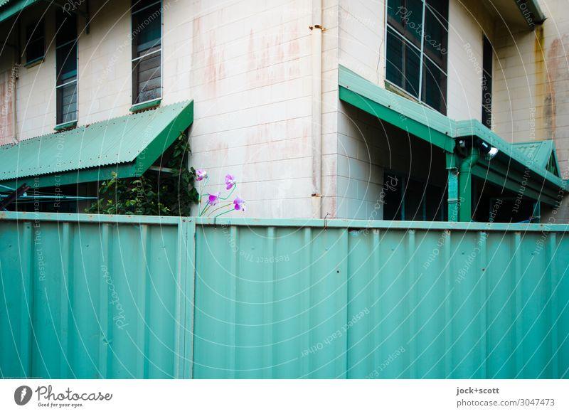 fence guard Queensland Holzhaus Fassade Fenster Ecke Hauseingang Vordach Metallzaun authentisch hoch grün Stimmung Sicherheit Verschwiegenheit Ordnung Stil