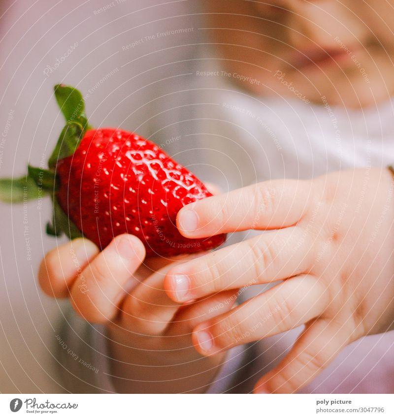 Babyhände halten Erdbeere Natur Sommer Pflanze Hand Gesundheit Lifestyle Leben Umwelt Frühling Gesundheitswesen Frucht Zufriedenheit Freizeit & Hobby Kindheit