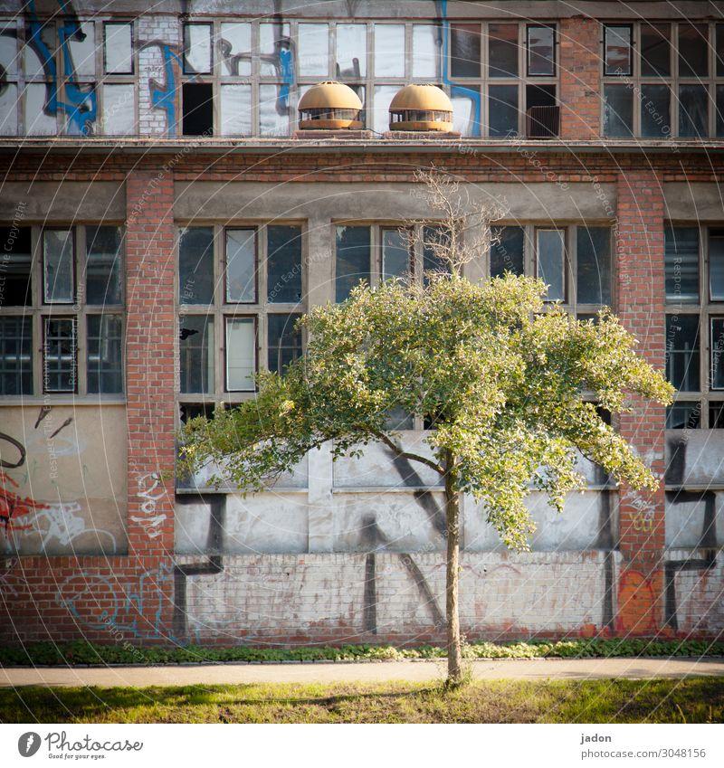 vorgarten. Lifestyle Traumhaus Garten Industrie Baustelle Kunst Subkultur Baum Ruine Bauwerk Gebäude Architektur Mauer Wand Fassade Graffiti alt trashig Stadt