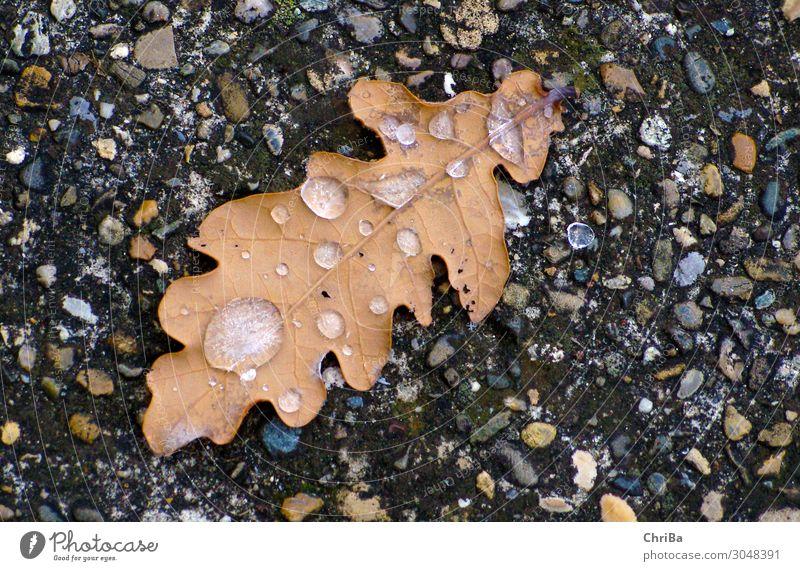Herbstkälte Natur Pflanze Urelemente Erde Wasser Wassertropfen Winter Klima schlechtes Wetter Eis Frost Baum Blatt Wildpflanze Wald Felsen Gefühle Stimmung
