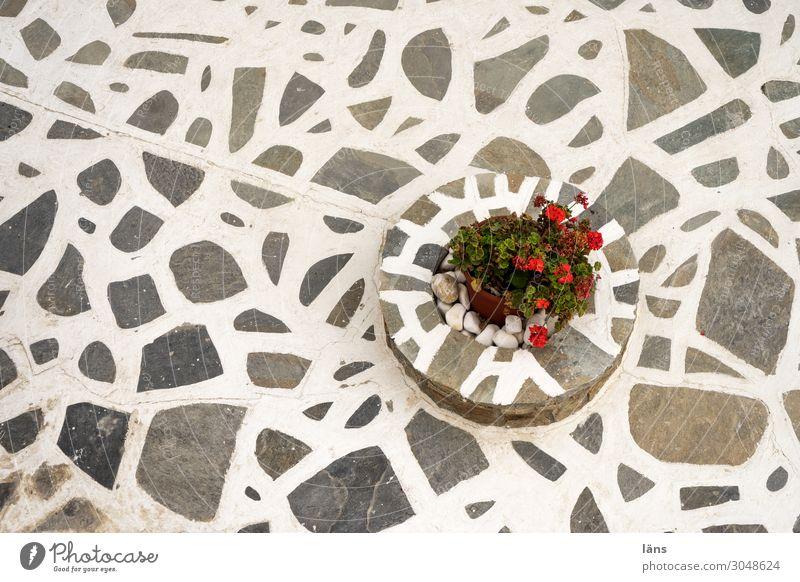 Blumen im Hof Ferien & Urlaub & Reisen Tourismus Häusliches Leben Pflanze Griechenland Terrasse grau weiß Konzentration Schwerpunkt Wege & Pfade Außenaufnahme