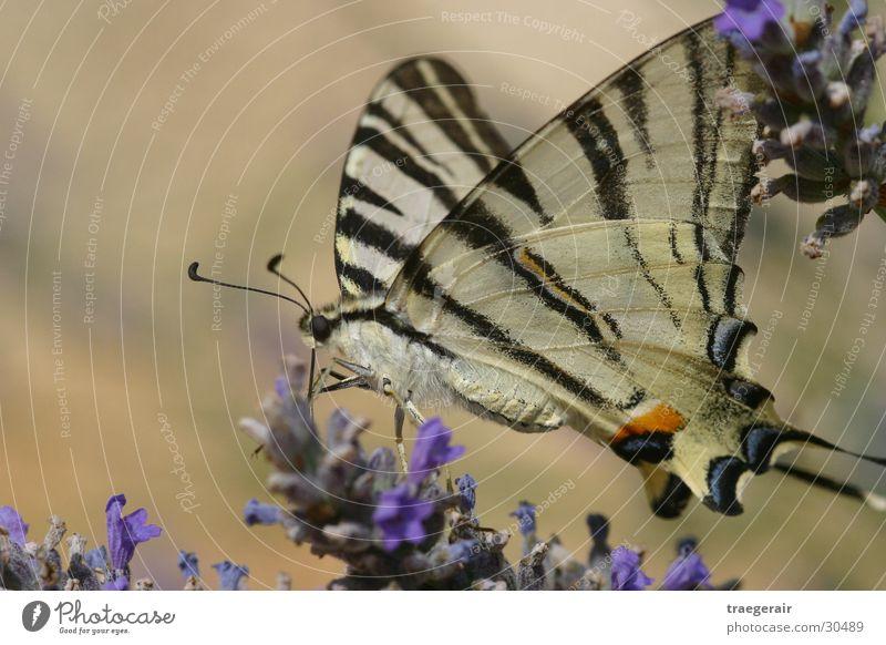 Süß ist das Leben Natur Blüte Schmetterling Stillleben Zufall