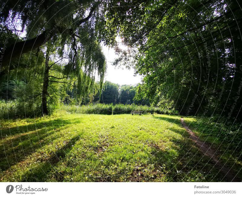 Schöne Ecken... Umwelt Natur Landschaft Pflanze Urelemente Erde Himmel Sommer Baum Gras Grünpflanze Wildpflanze Garten Park Wiese Wald hell natürlich grün