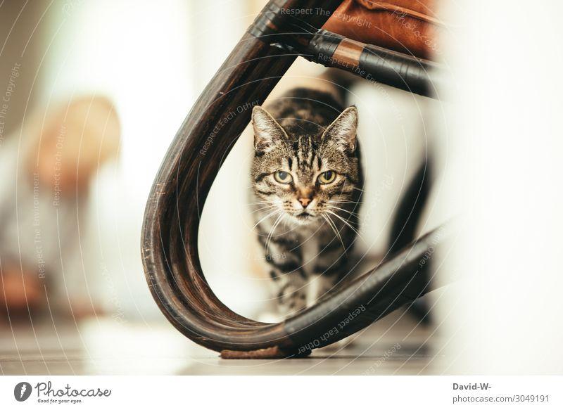 Miau Wohlgefühl Zufriedenheit ruhig Häusliches Leben Wohnung Haus Mensch maskulin feminin Kind Kleinkind Kindheit 1 Tier Haustier Katze Tiergesicht Fell