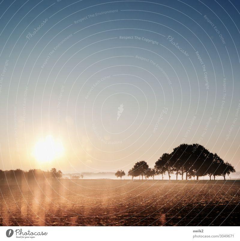 Immer weiter Umwelt Natur Landschaft Erde Wolkenloser Himmel Horizont Sonne Herbst Schönes Wetter Baum Feld Verkehr Verkehrswege Straße leuchten glänzend hell