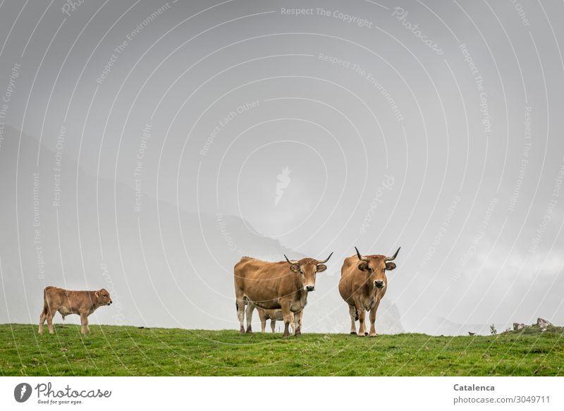 Betrachtungsweise Natur Landschaft Pflanze Tier Himmel Gewitterwolken Horizont Sommer schlechtes Wetter Gras Wiese Berge u. Gebirge Schneebedeckte Gipfel