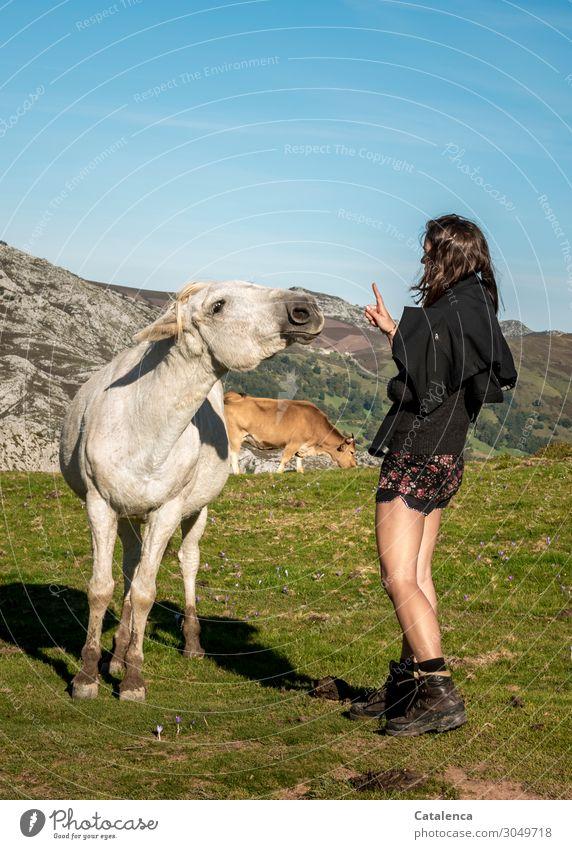 Fingerspitzengefühl   braucht man im Umgang mit frechen Pferden Ausflug Berge u. Gebirge wandern feminin Junge Frau Jugendliche 1 Mensch Natur Landschaft