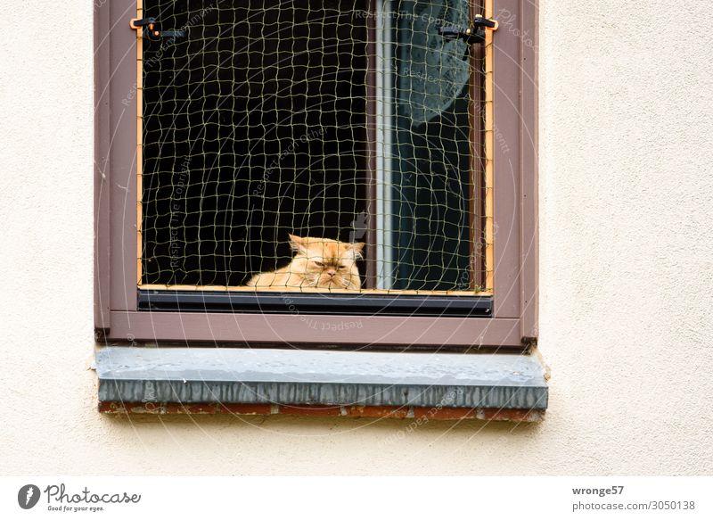 Katze am offenen Fenster Mauer Wand Tier Haustier 1 beobachten warten Häusliches Leben Neugier Stadt mehrfarbig Tierliebe Hauskatze Fensterbrett Fensterplatz