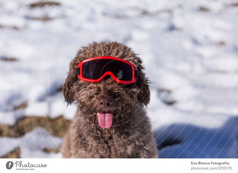 Ferien & Urlaub & Reisen Natur Hund Weihnachten & Advent schön weiß Landschaft rot Sonne Erholung Tier Freude Winter Berge u. Gebirge Lifestyle Herbst