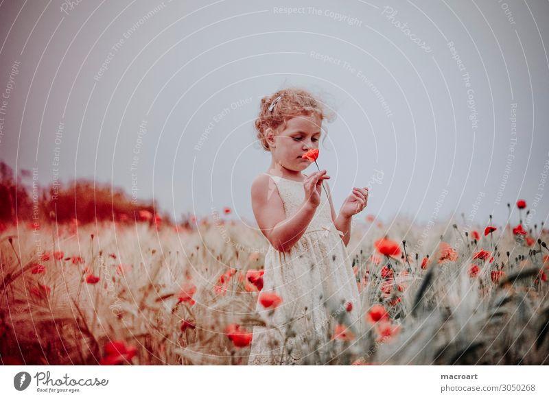 Kind im Mohnfeld Frau Sommer Pflanze rot Blume Tier Mädchen Leben Blüte feminin Feld festhalten bezaubernd