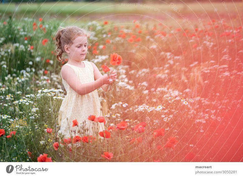 Kind hält Mohnblume Mohnfeld Feld Mohnblüte Blume Blüte rot festhalten Mädchen Frau feminin Pflanze Tier Sommer Leben mehrfarbig bezaubernd