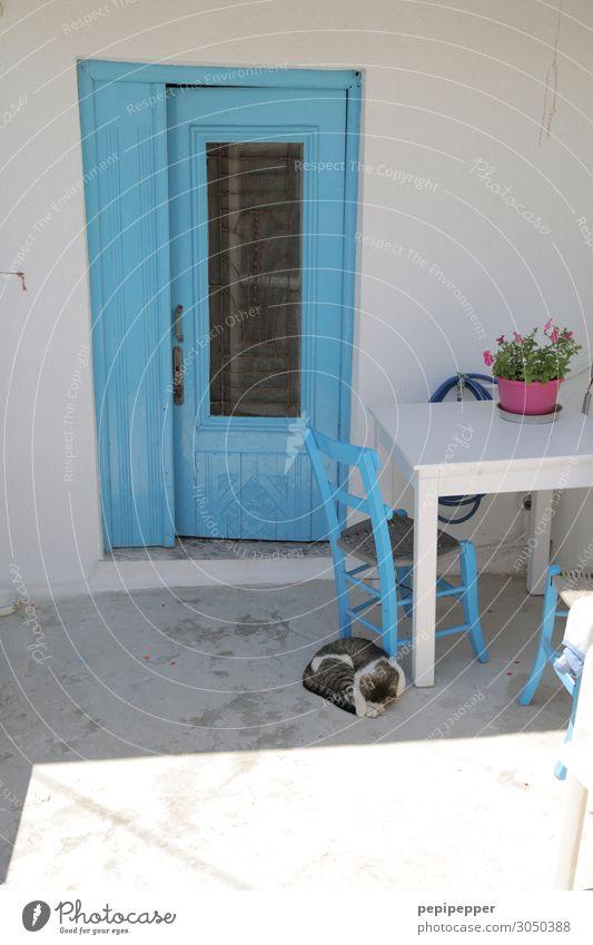 Griechenland Ferien & Urlaub & Reisen Tourismus Häusliches Leben Wohnung Haus Stuhl Tisch Fischerdorf Mauer Wand Terrasse Tür Tier Katze Stein schlafen blau