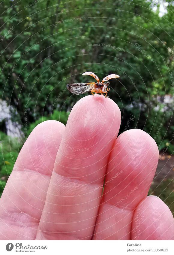 Starterlaubnis erteilt Mensch feminin Haut Hand Finger Umwelt Natur Pflanze Tier Sommer Sträucher Garten Park Käfer Flügel 1 frei klein natürlich fliegen