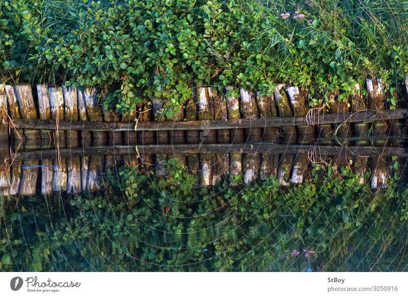 Reflexionen am Peenestrom Ausflug Umwelt Natur Landschaft Pflanze Wasser Sommer Sträucher Grünpflanze Flussufer braun grün Farbfoto Außenaufnahme