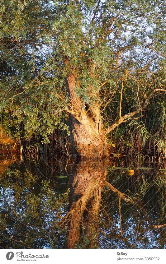 Reflexionen am Peenestrom - Weide Umwelt Natur Landschaft Pflanze Wasser Sommer Baum Flussufer blau braun grün Farbfoto Außenaufnahme Tag Reflexion & Spiegelung