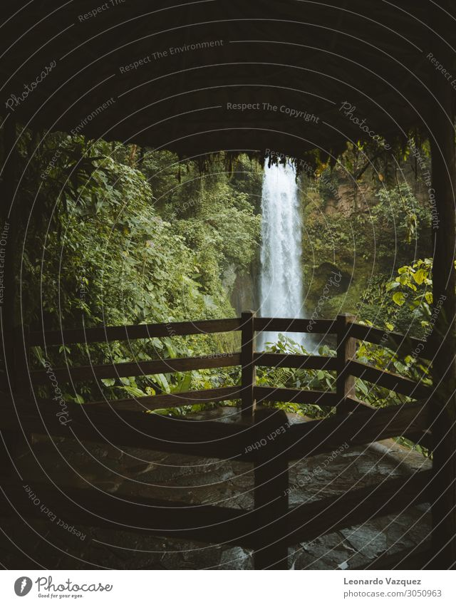 Costa Rica Wasserfall Umwelt Natur Landschaft Pflanze Frühling Regen Garten Park Abenteuer Ferien & Urlaub & Reisen Farbfoto Außenaufnahme Menschenleer Morgen