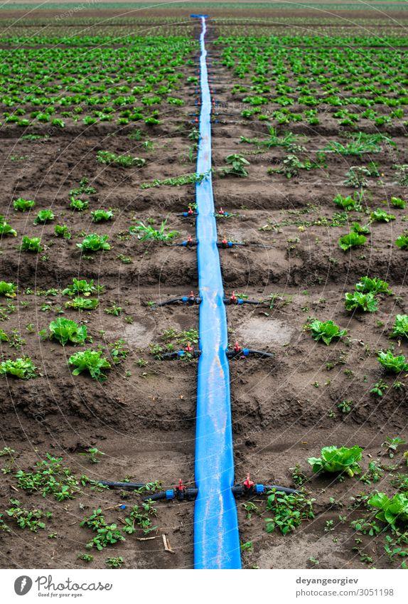 Bepflanzte landwirtschaftliche Flächen und Leitungen zur Bewässerung. Garten Umwelt Pflanze Erde Kunststoff grün bewässern Wasser Ackerbau pumpend Röhren