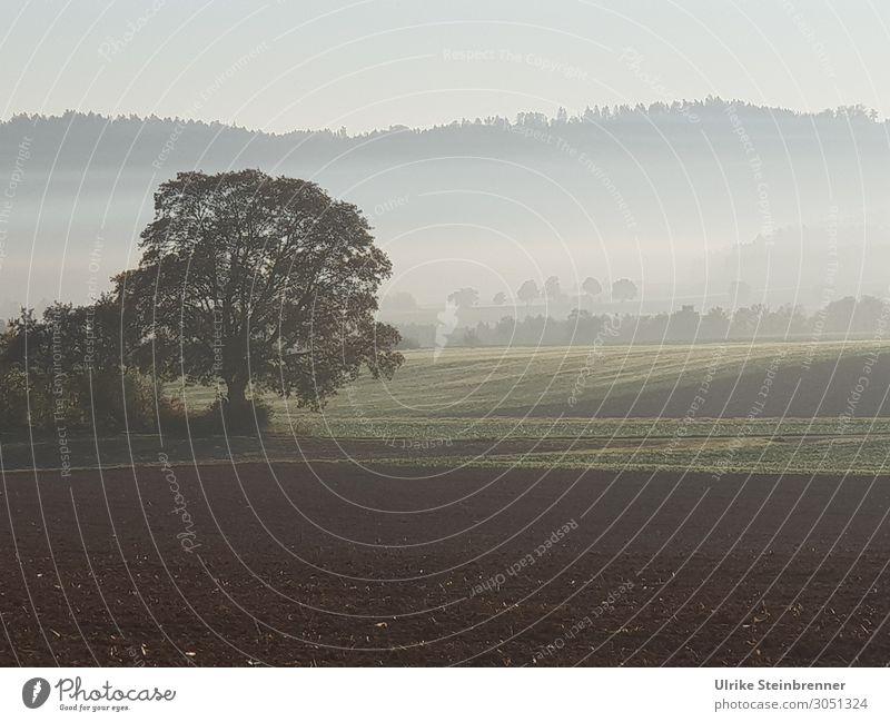 Herbstmorgen Umwelt Natur Landschaft Pflanze Erde Himmel Nebel Baum Feld Wald natürlich Wandel & Veränderung herbstlich Nebelschleier Nebelwald ruhig unklar