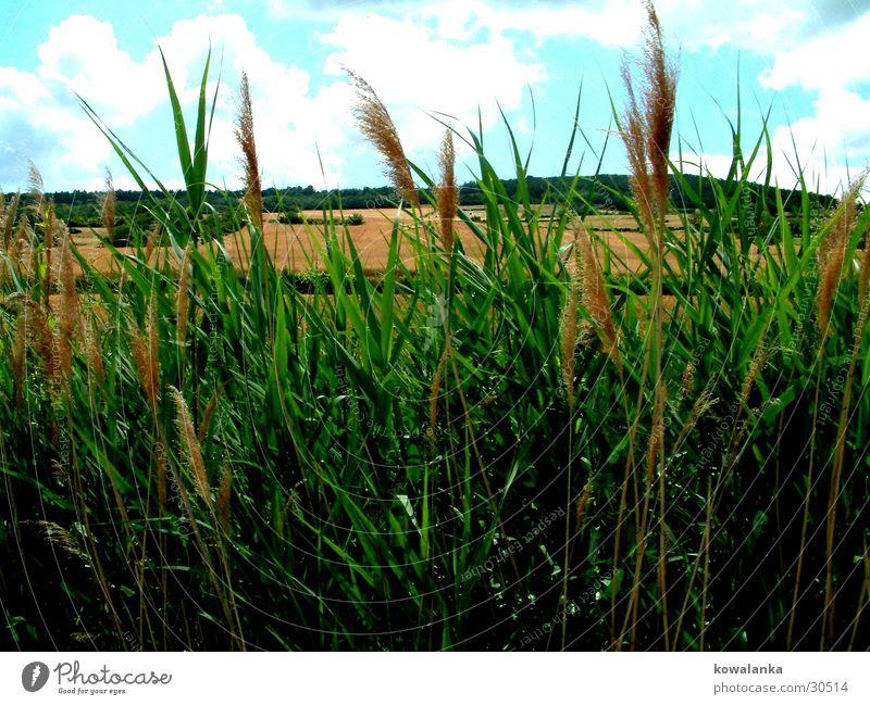Feld Natur grün Gras