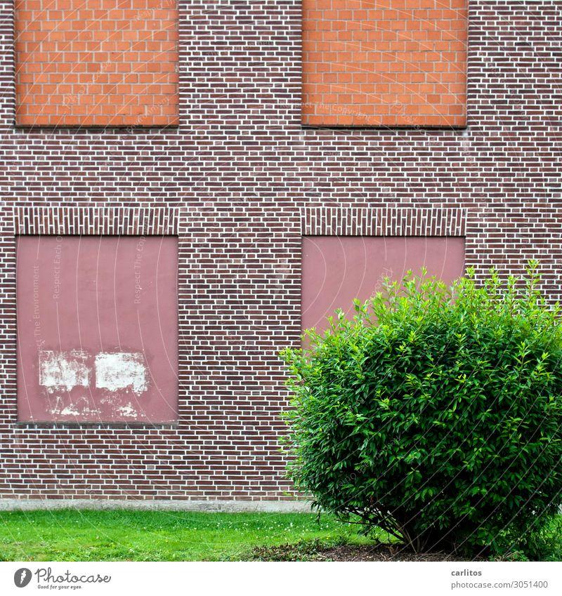Rathaus zu Schilda Haus Fassade Fenster Mauer geschlossen Schildbürger Unsinn Menschenleer Einsamkeit Unbewohnt Ruine