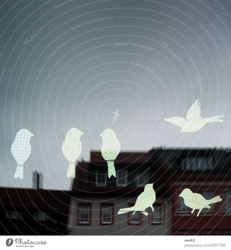 Zerstreut Haus Fenster Spielen Vogel Zusammensein fliegen Design Dekoration & Verzierung Kommunizieren Glas sitzen Neugier Dach Wolkenloser Himmel Karton