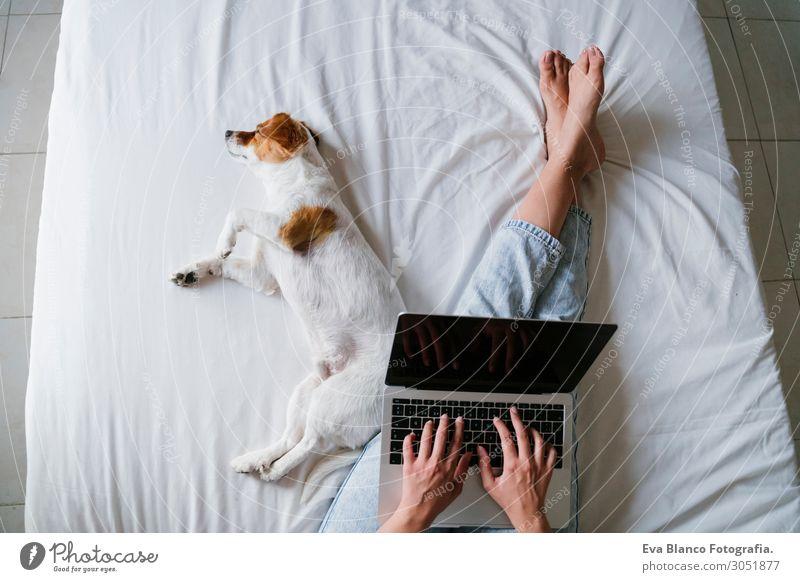 junge Frau auf dem Bett, die am Laptop arbeitet, süßer kleiner Hund nebenbei Lifestyle Freude Glück schön Erholung Freizeit & Hobby Spielen Computer Notebook