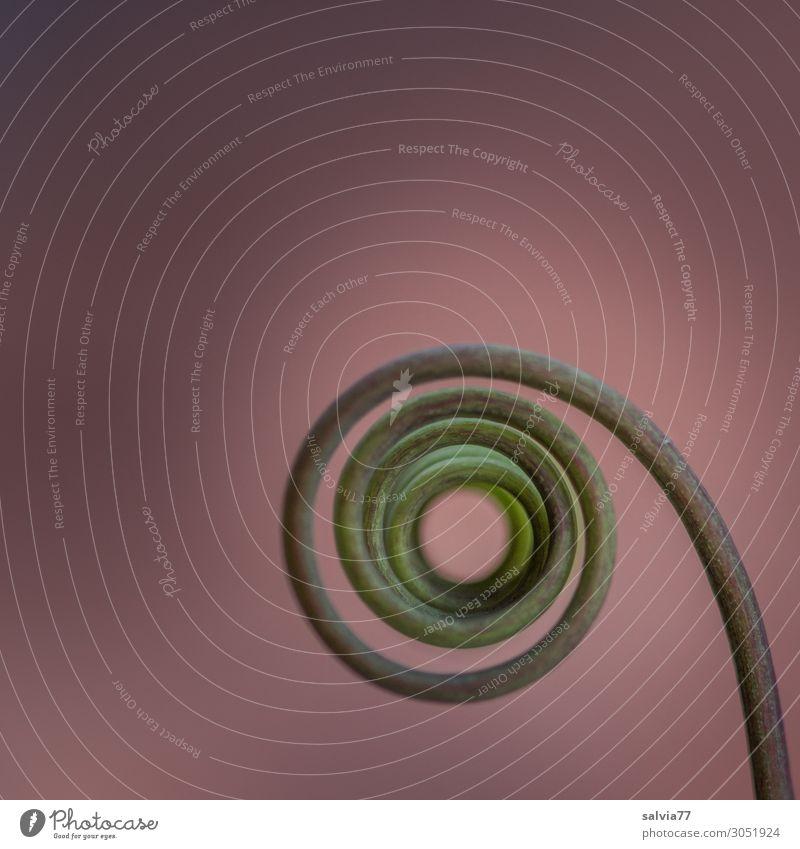 Spirale Natur Pflanze Ranke Passionsblume Metallfeder außergewöhnlich rund Strukturen & Formen Windung beweglich Farbfoto Gedeckte Farben Außenaufnahme