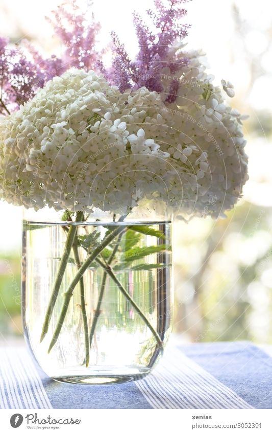 helle Hortensie in Vase mit Wasser auf blauer Tischdecke Blumenvase Hortensienblüte Wohnung Dekoration & Verzierung Blumenstrauß Tischwäsche Blüte Blühend Duft