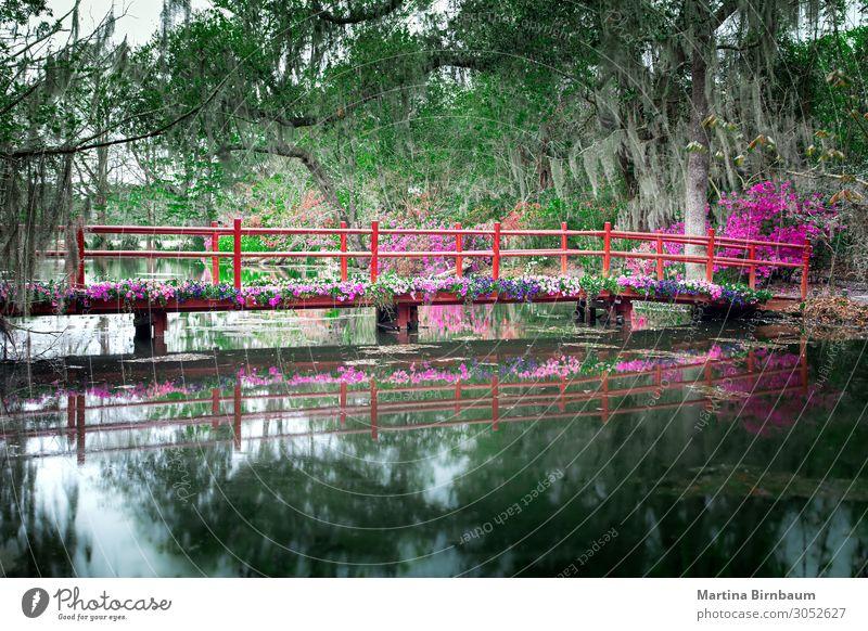 Rote Brücke mit blühenden Blumen in Charleston schön Ferien & Urlaub & Reisen Tourismus Garten Natur Landschaft Pflanze Baum Moos Park Wald See natürlich grün