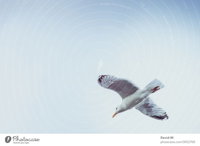 Möwe Tier Wildtier Vogel Flügel 1 fliegen hoch oben Himmel Möwenvögel gleiten Schweben Schönes Wetter schön Schnabel Nordsee Ostsee See Urlaubsstimmung