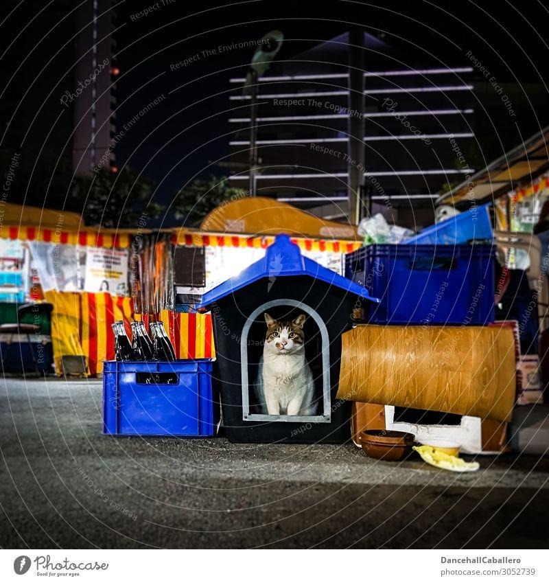 Marktmieze... Tier Stadt Stadtzentrum Stadtrand Fußgängerzone Haustier Katze 1 dunkel niedlich schön Zufriedenheit Tierliebe Einsamkeit Hütte Nachtmarkt