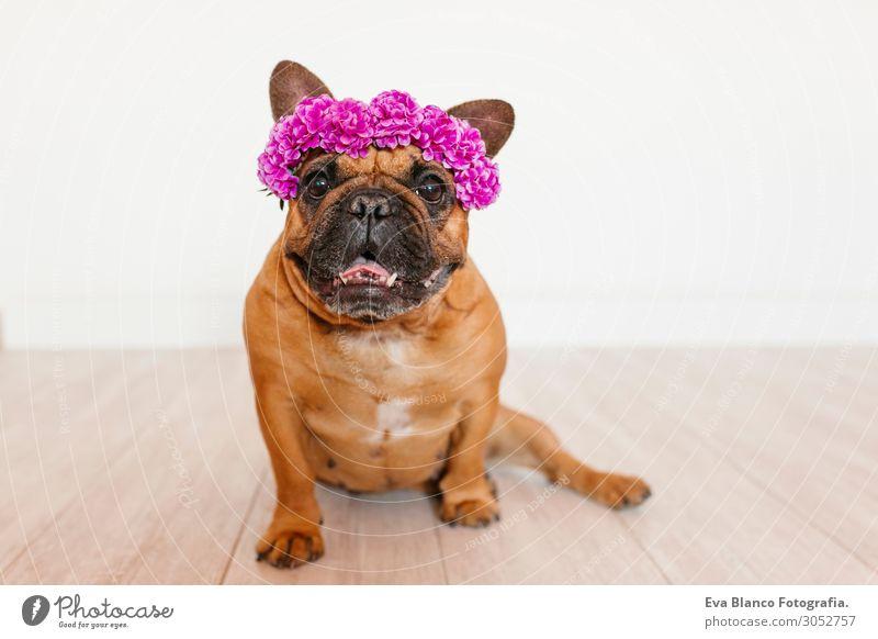 Ferien & Urlaub & Reisen Hund Sommer Farbe schön weiß Blume Haus Erholung Tier Freude Lifestyle Frühling natürlich lustig lachen