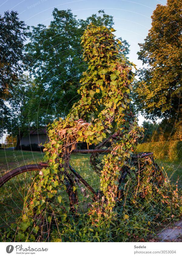Radfahrerdenkmal Freizeit & Hobby Sport Fitness Sport-Training Fahrradfahren Kunst Skulptur Baum Efeu Wiese Park Sinnbild ästhetisch authentisch außergewöhnlich
