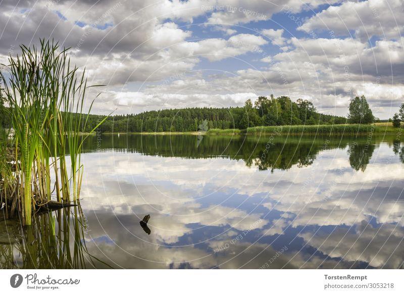 Stausee Heyda Sommer Landschaft Wasser Wolken See blau grün weiß Mittelgebirge deutschland himmel Thüringen Thüringer Wald Talsperre Farbfoto Außenaufnahme Tag