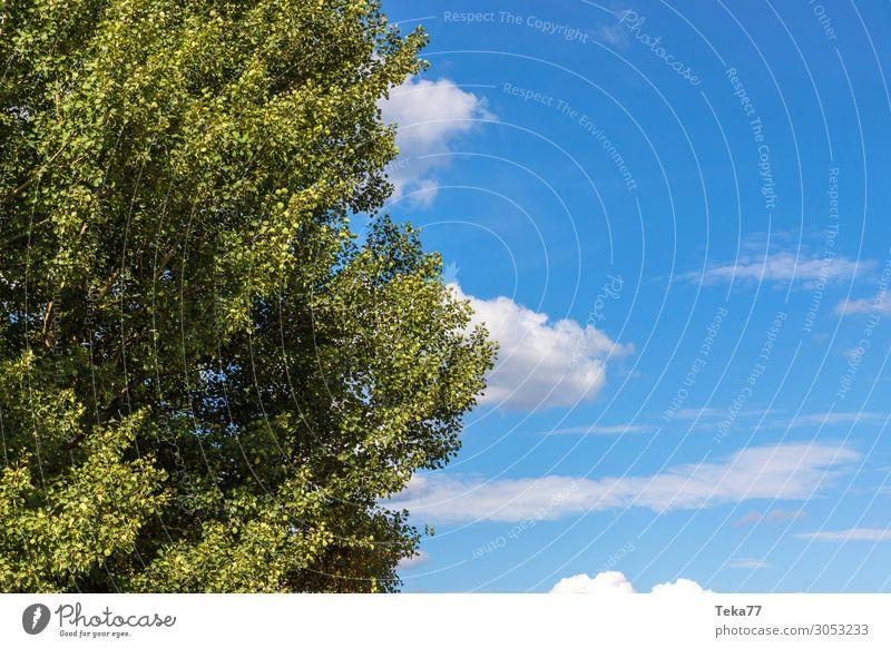 Baum und Himmel Umwelt Natur Landschaft Klimawandel Wetter Schönes Wetter ästhetisch Farbfoto Gedeckte Farben Tag