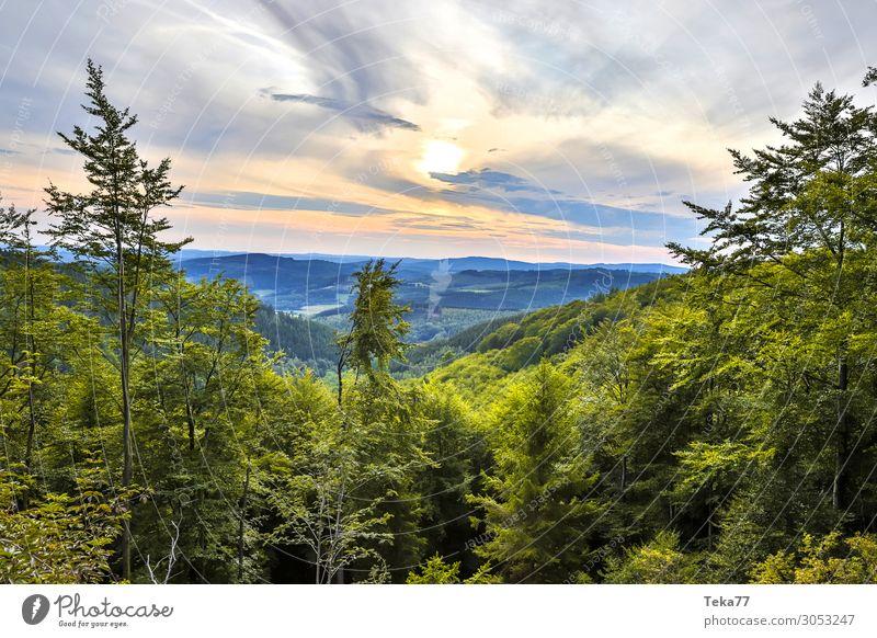 Abendwaldland Natur Pflanze Landschaft Wald Berge u. Gebirge Umwelt ästhetisch Hügel Siegerland