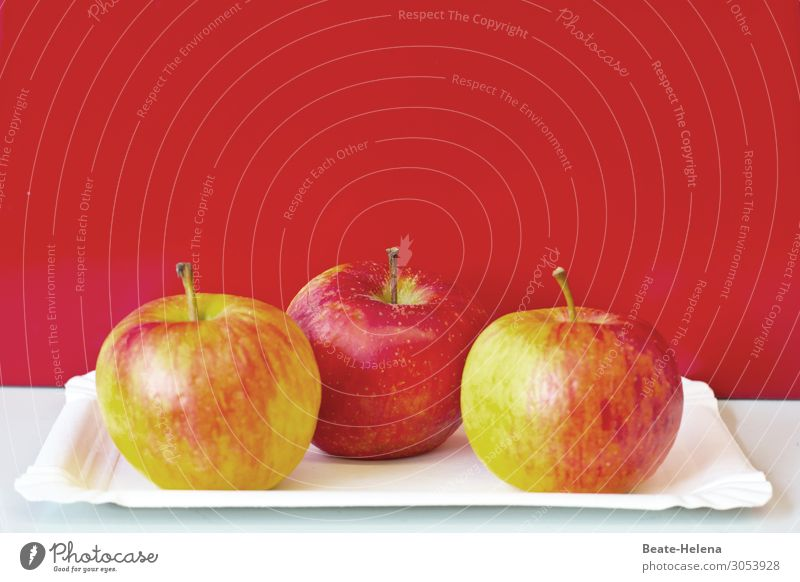 An Apple a Day .. Natur Gesunde Ernährung Pflanze rot Gesundheit Lebensmittel Essen Lifestyle Frucht süß frisch glänzend ästhetisch genießen Fitness