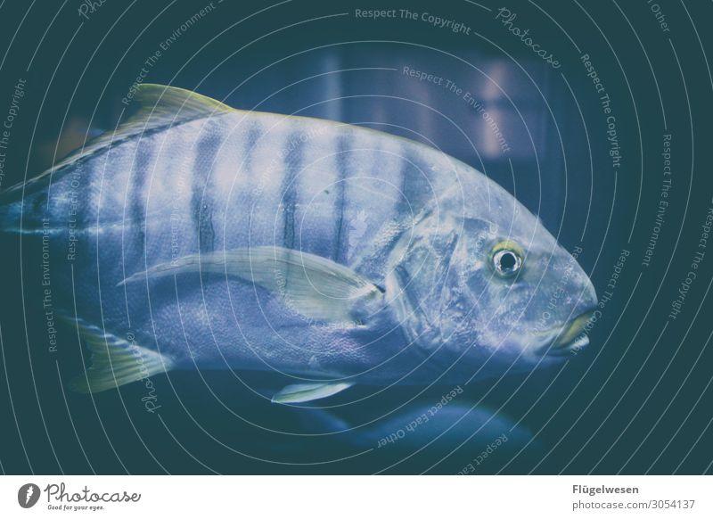 Fisch Fischereiwirtschaft Fischland-Darß-Zingst fischen Fischerdorf Fischgericht Fischauge