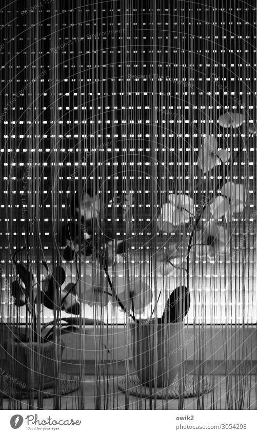 Quarantäne Fenster Kunstblume Blumentopf Blumenvase Jalousie Fensterbrett Gardine Vorhang Glas Kunststoff dunkel geduldig ruhig Traurigkeit Sorge Trauer Schmerz