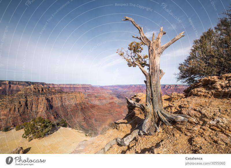 Ausdauer Ferne wandern Natur Landschaft Pflanze Erde Wolkenloser Himmel Horizont Schönes Wetter Baum Sträucher Totale Felsen Berge u. Gebirge Schlucht